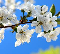 Het voorjaar komt er aan!